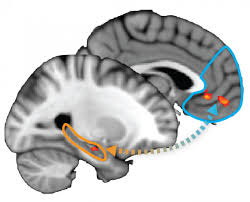 Map Of Ut Austin by Ut Austin Psychology Researchers Map Neurological Process Of