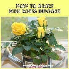 Plant Flower Garden - best 25 indoor flowers ideas on pinterest indoor flowering