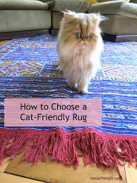 how to choose a rug for a cat friendly home cat and animal