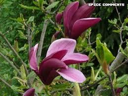 Seeking Yorumlar çiçekler Yorumlar Ve Myspace Için Sayfa 14