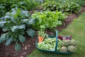 beauty vegetable garden mulch outdoor furniture choosing