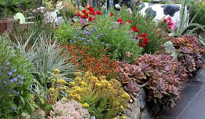annie u0027s annuals u0026 perennials gardening on the rocks