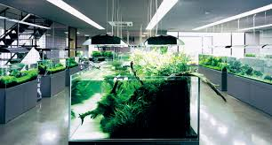 Aquascaping Shop Ada Nature Aquarium Nature Aquarium Gallery Aquascaping