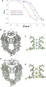 structure of a pore blocking toxin in complex with a eukaryotic
