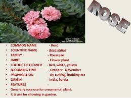 identification of ornamentals