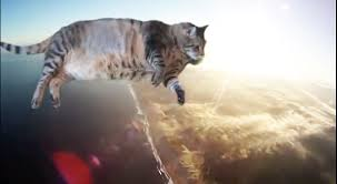 Flying Cat Meme - this video of a cat flying through the air to christopher cross