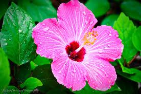 tropical flowers qygjxz