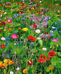 colorful flower gardens stunning low budget container gardens wildflowers hummingbird