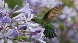 Hummingbird On A Flower - the best flowers to attract butterflies bees and hummingbirds