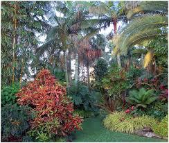 backyards beautiful tropical backyard plants tropical backyard