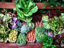 Gardening For Beginners Vegetables by Vegetable Garden Planning For Beginners The Prepper Journal