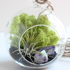 terrarium kit with amethyst crystal points air plant and black