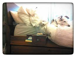 Floating Dog Bed Floating Bedside Table 3 Steps With Pictures
