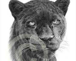 black panther pencil drawing print a4 size artwork signed