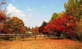 fall autumn 15 top places to see autumn leaves and fall foliage in korea