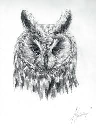 long eared owl sketch by swimdude002 on deviantart