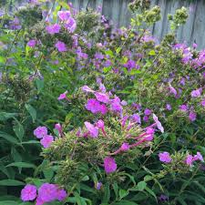 why plant native plants plant native species williamson county tn official site