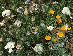 49 best california native plants low growing parkway plants your city will love weeding wild suburbia