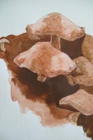 shiitake mushrooms nature drawings pictures drawings ideas for