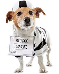 Buy Halloween Costumes Dog Halloween Costumes Halloween Costumes Dogs