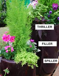 Container Gardening Flowers Outdoor Container Planting Wights