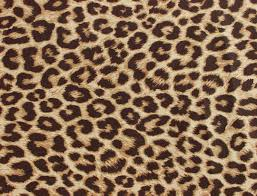 zebra and cheetah wallpapers free download clip art free clip