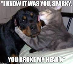 Dog Kiss Meme - image tagged in godfather cat dog kiss kiss of death imgflip