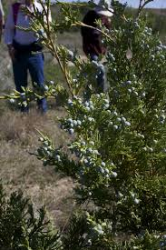 montana native plant society plants of the past native species topic of seminar local news