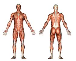 Human Anatomy Exam Questions Free Usmle Practice Questions
