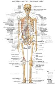 233 best anatomy and physiology images on pinterest human