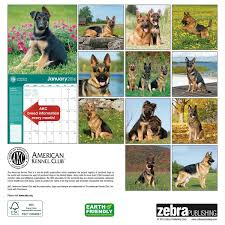 german shepherds american kennel club 2016 wall calendar zebra