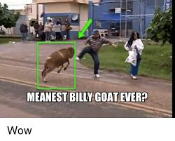 Billy Goat Meme - meanest billy goat ever wow meme on sizzle