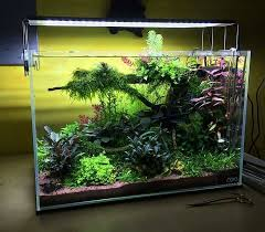 Aquascape Designs For Aquariums Acuario Plantado Acuarios Inspiraciones Pinterest Aquariums
