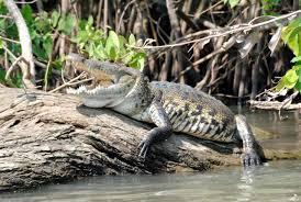 manglares tecolutla veracruz trip pinterest