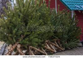 christmas tree garden stock images royalty free images u0026 vectors