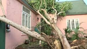 west palm neighborhood deals with three trees blocking