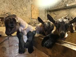 chambre d h e dordogne chèvrerie du lac de roudet home