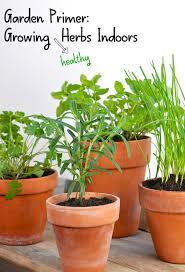herbs indoors garden primer grow healthy herbs indoors greenthumbwhiteapron com
