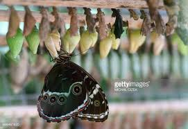 live butterfly exhibit stock photos and pictures getty images