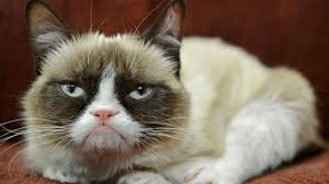 Frown Cat Meme - grumpy cat s owner quit her day job but denies claim the crabby