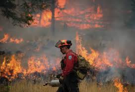 Canadian Wildland Fire Training by B C Loses More Than One Million Hectares To Wildfires