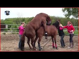 mustangs mating mating collection 17 amazing the help horses mating