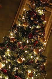 brown christmas tree christmas tree dauson stimpson gagnon