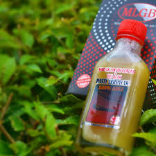 minyak lintah gunung belacak moutain leech mudskipper massage oil
