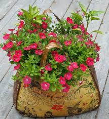 in door plant put in pot vide 10 container garden tips for beginners