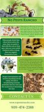 Small Ants With Wings In Bathroom Best 25 Ant Exterminator Ideas On Pinterest Ants In House