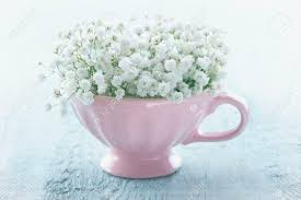 baby s breath flowers white baby s breath flowers in a pink cup on light blue wooden