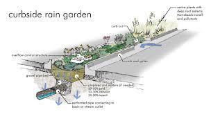 native plants for rain gardens landscape design low impact development u0026 stormwater management