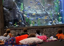 events archive mystic aquarium