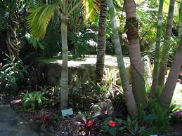 queen palm tree landscaping ideas inspiring palm tree